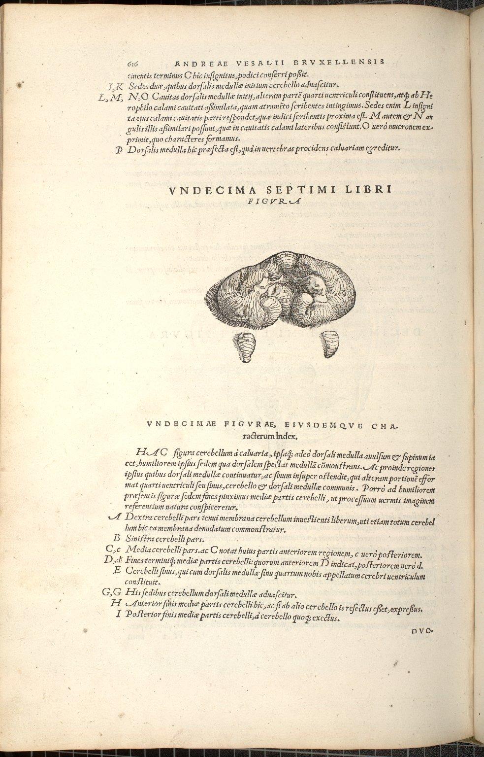 Undecima Septimi Libri Figura
