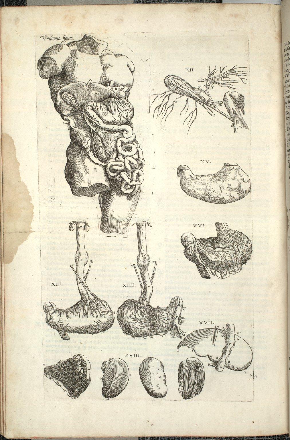 Undecima Figura, XII-XVIII