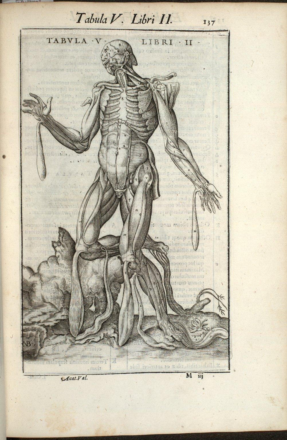 Tabula V. Libri II.