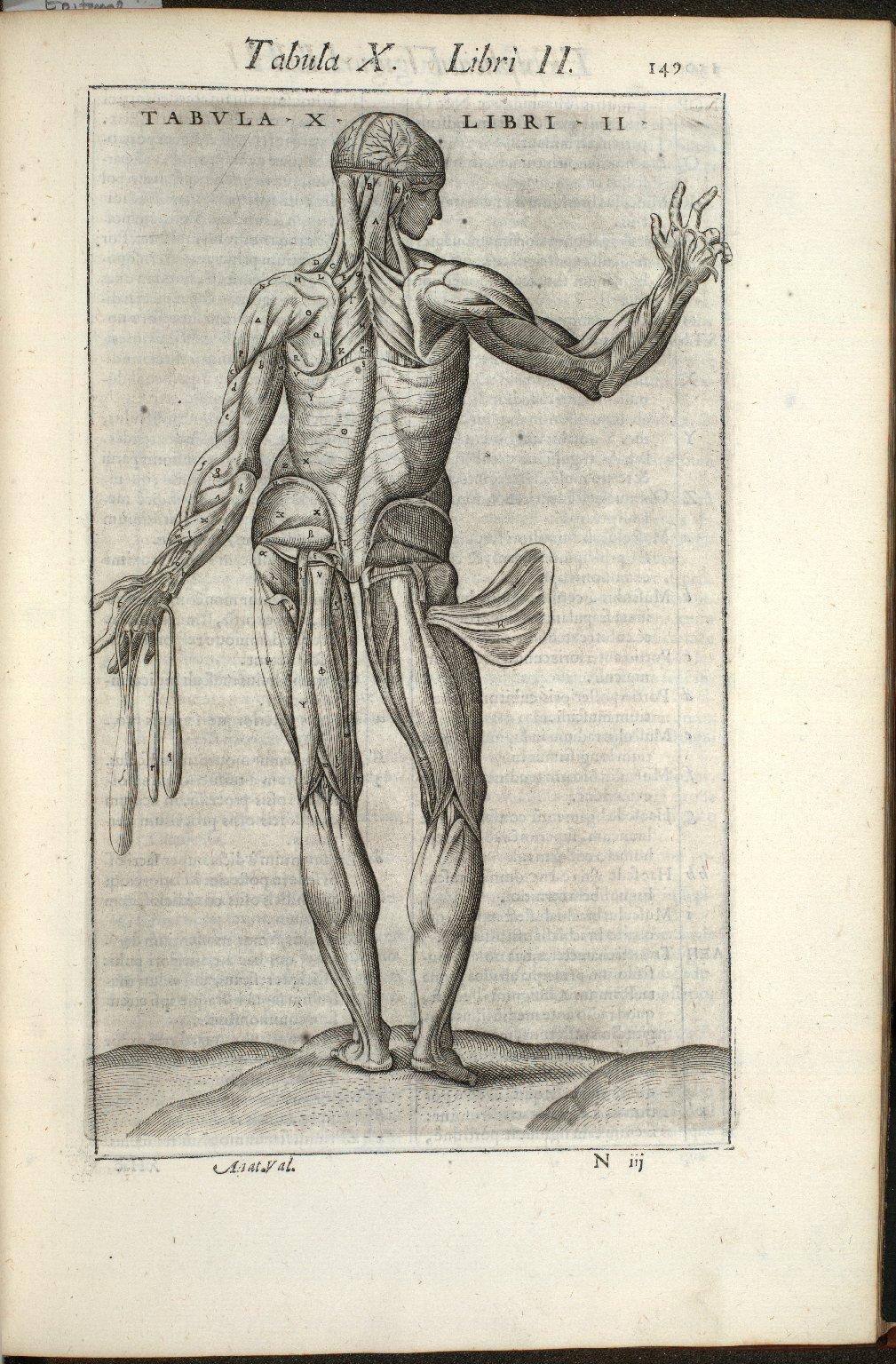 Tabula X. Libri II.