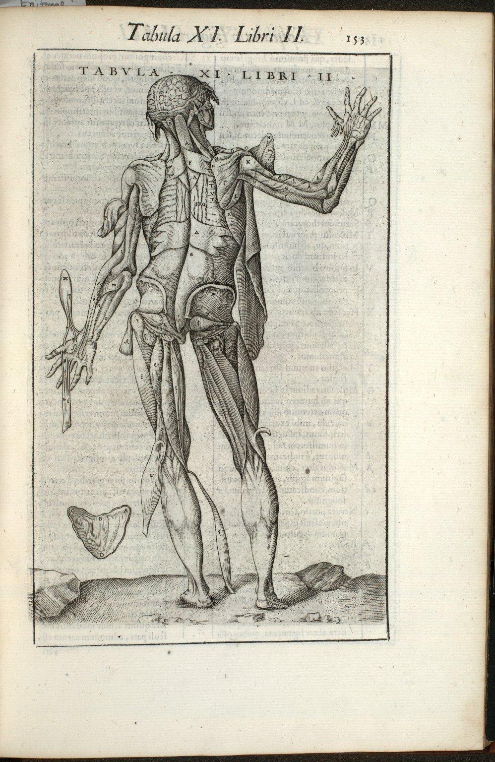 Tabula XI. Libri II.