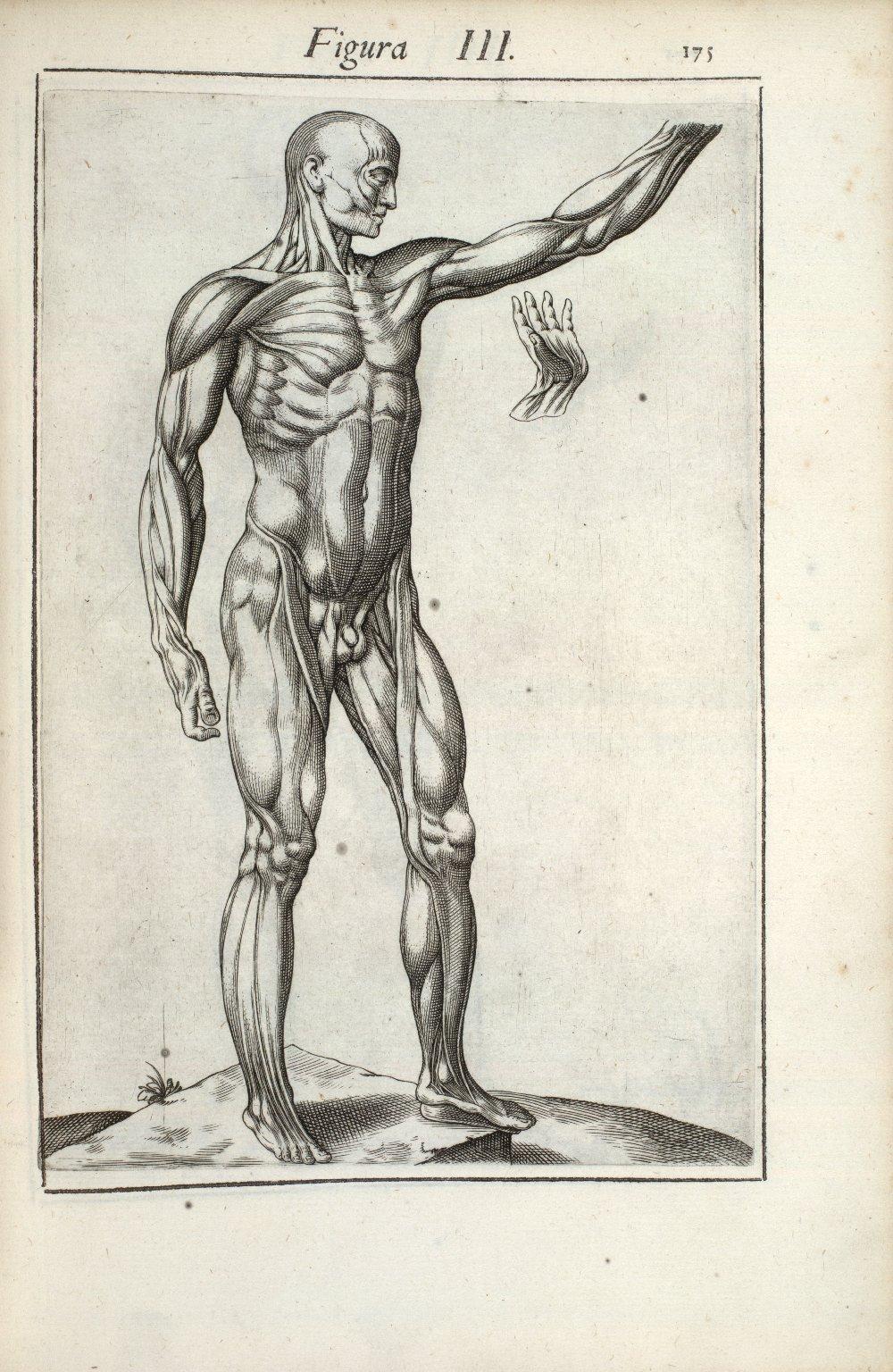 Figura III