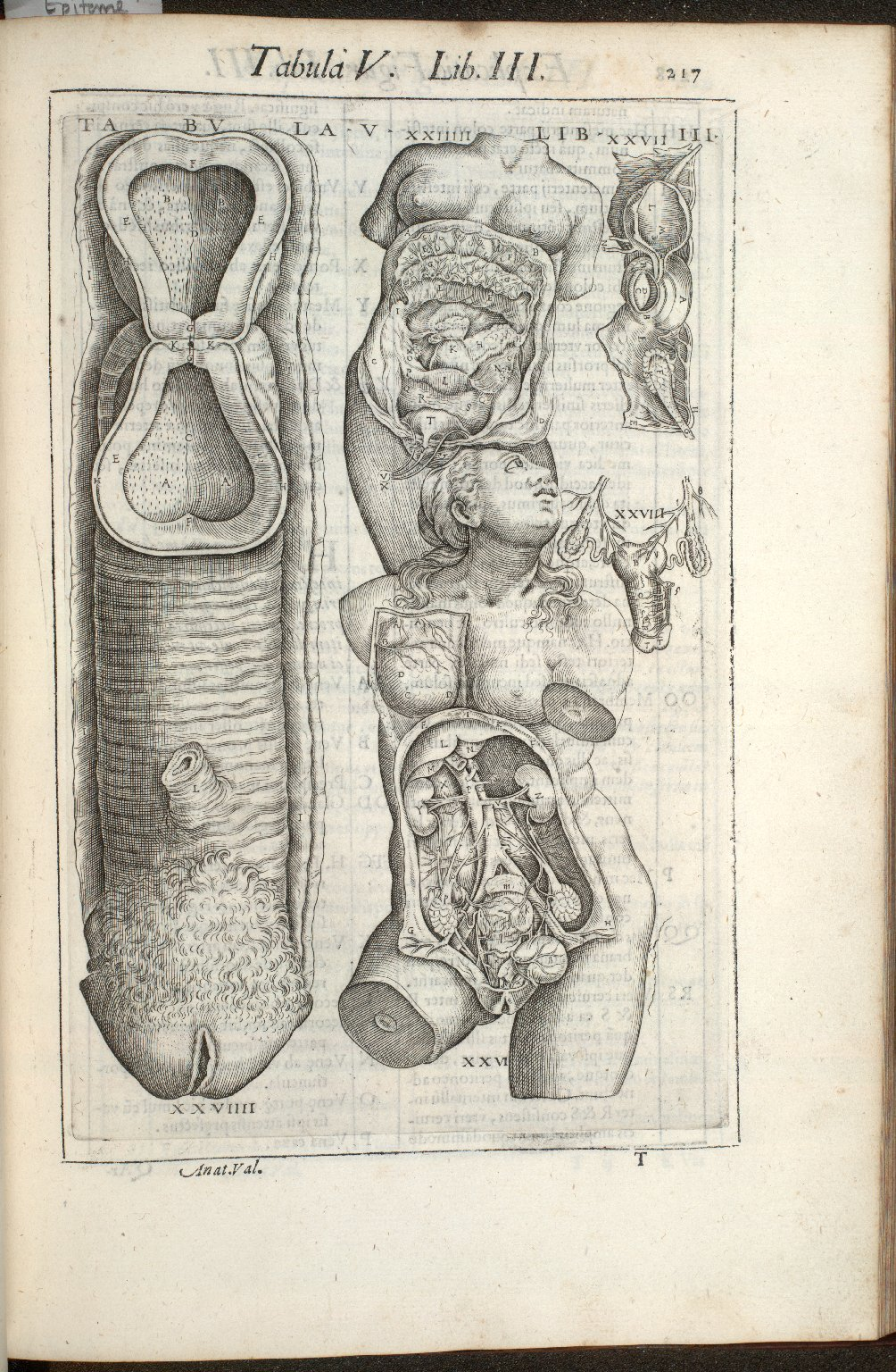Tabula V. Libri III.