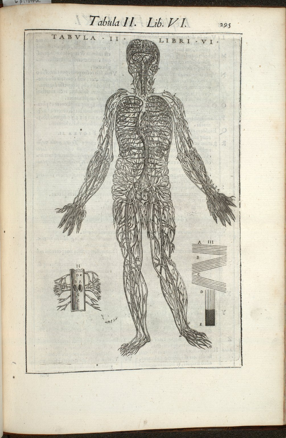 Tabula II. Libri VI.