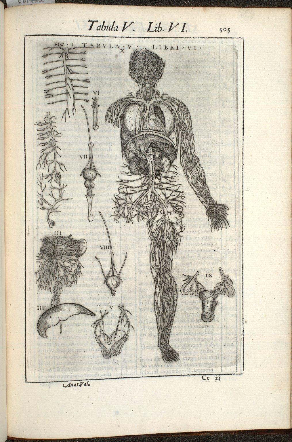 Tabula V. Libri VI.