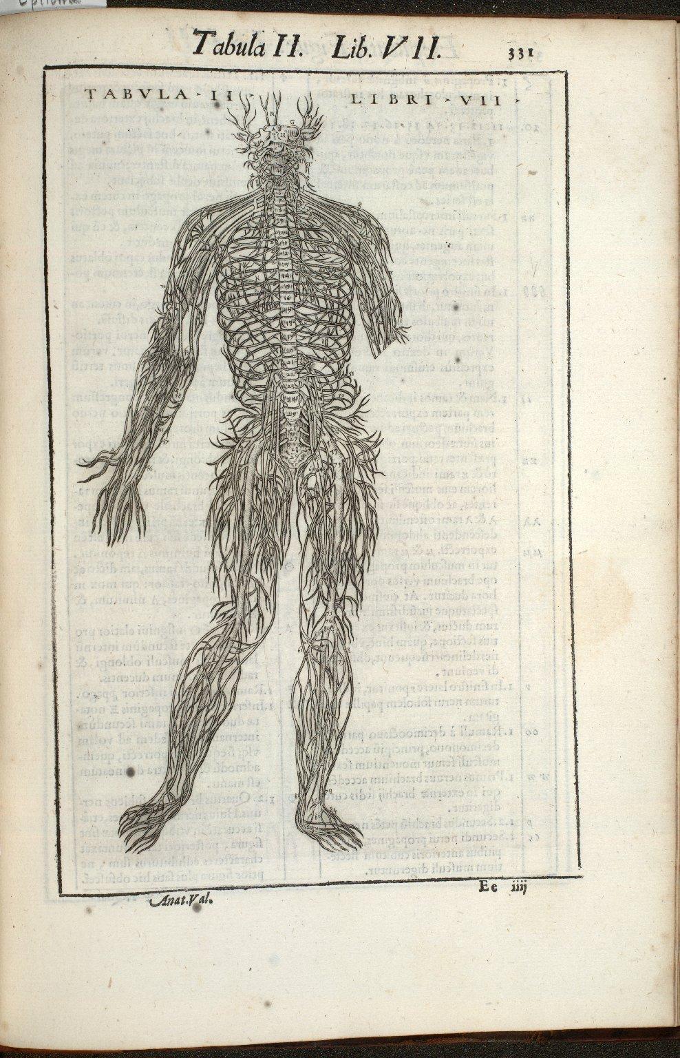 Tabula II. Libri VII.
