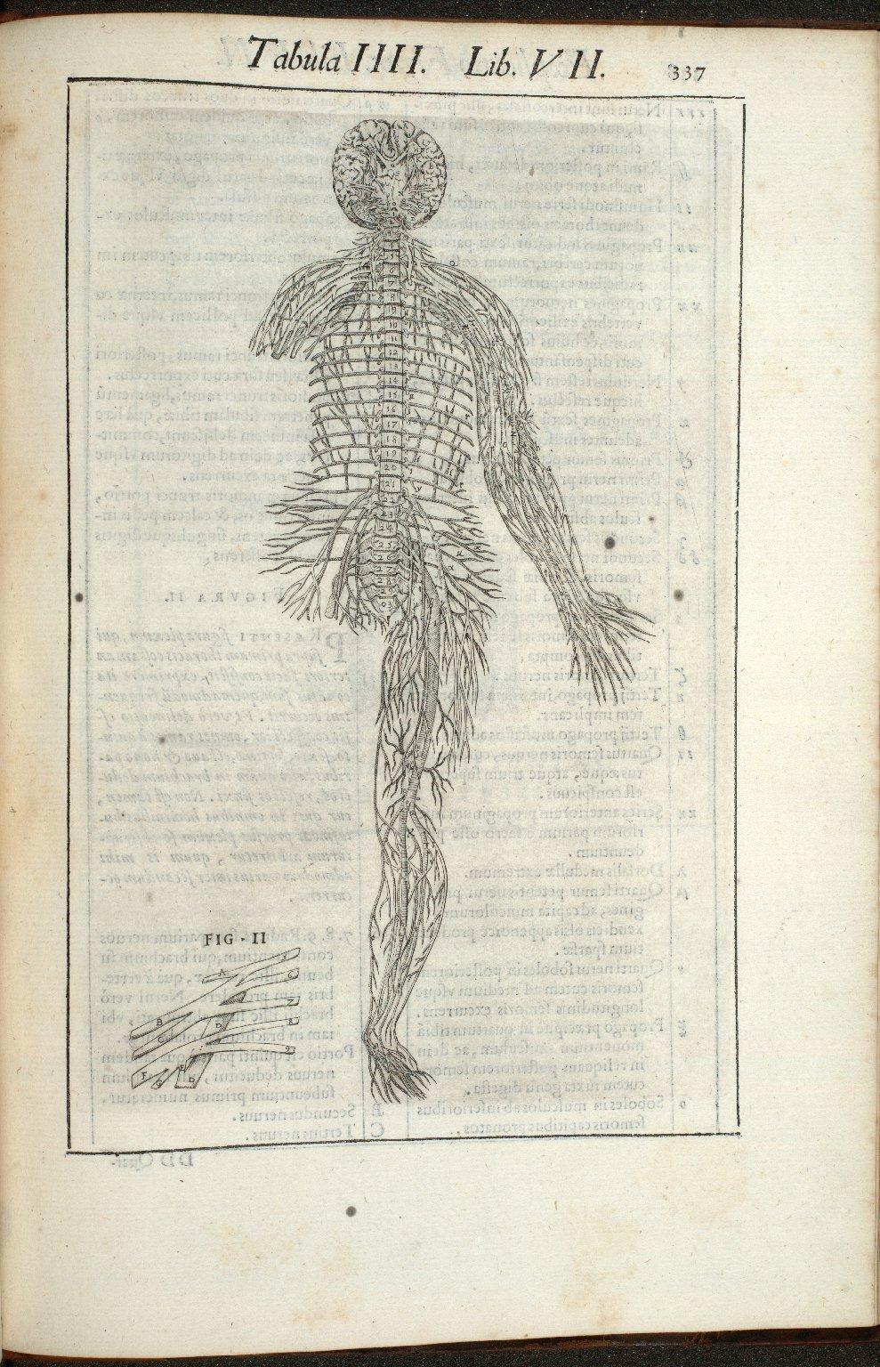 Tabula IIII. Libri VII.