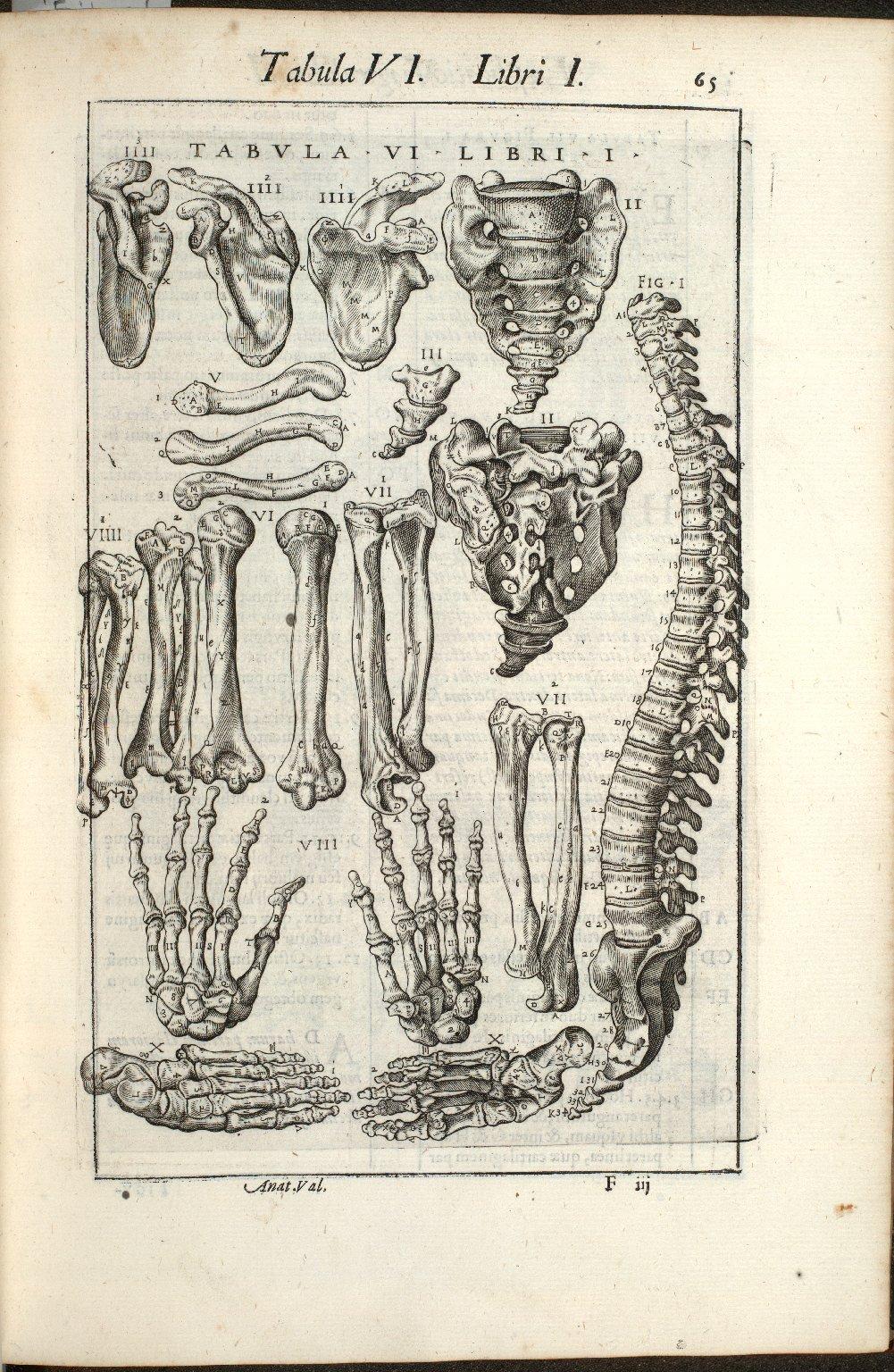 Tabula VI. Libri I.