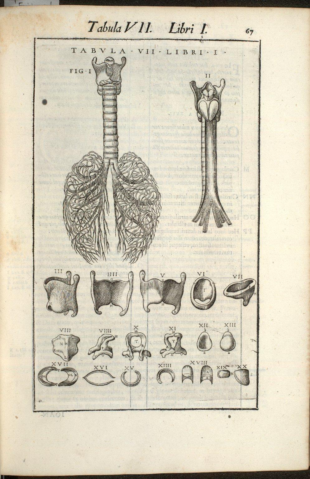 Tabula VII. Libri I.