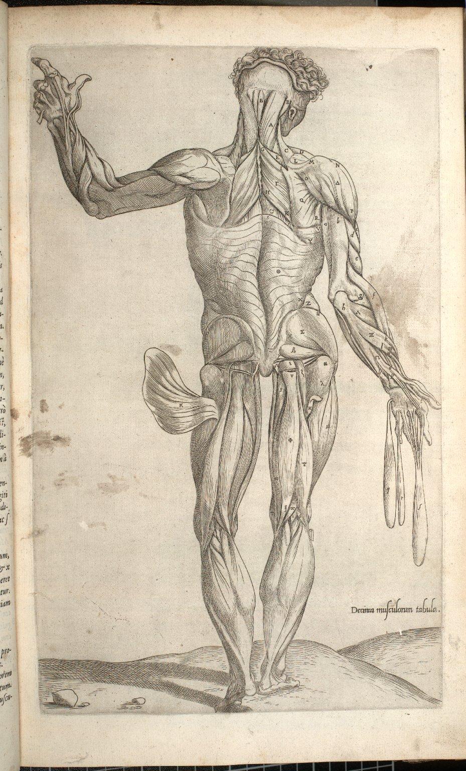 Decima Musculorum Tabula