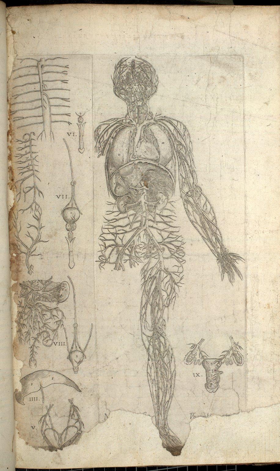 Nona ac postrema huius tractatus Figura. Venarum et item arteriarum omnium integra absolutaque delineationem continet