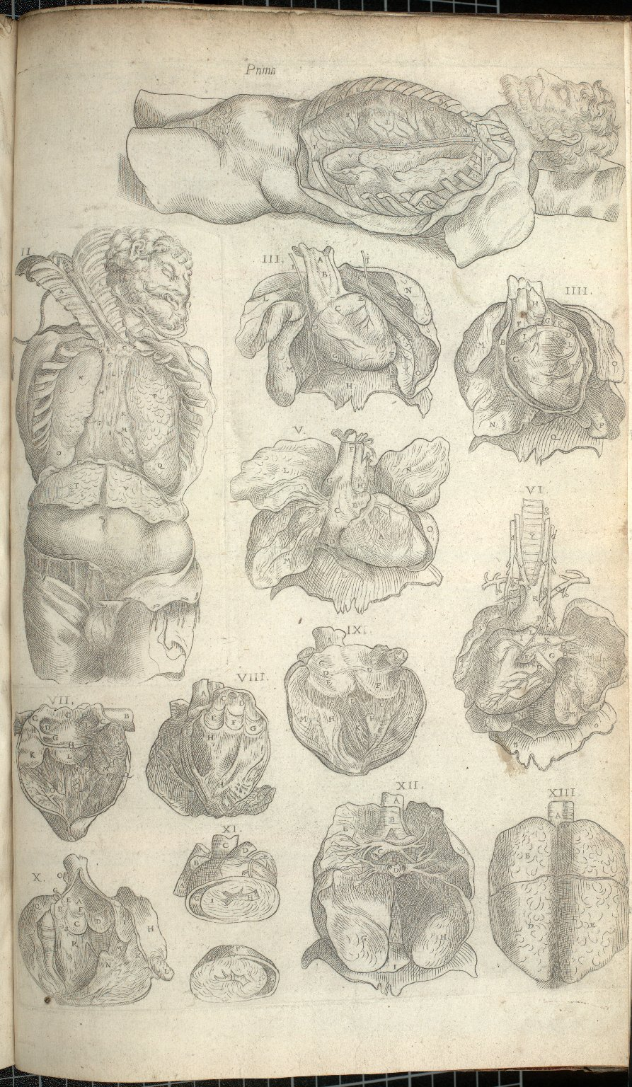 Prima, et.al. (Tables of the Organs of the Heart)