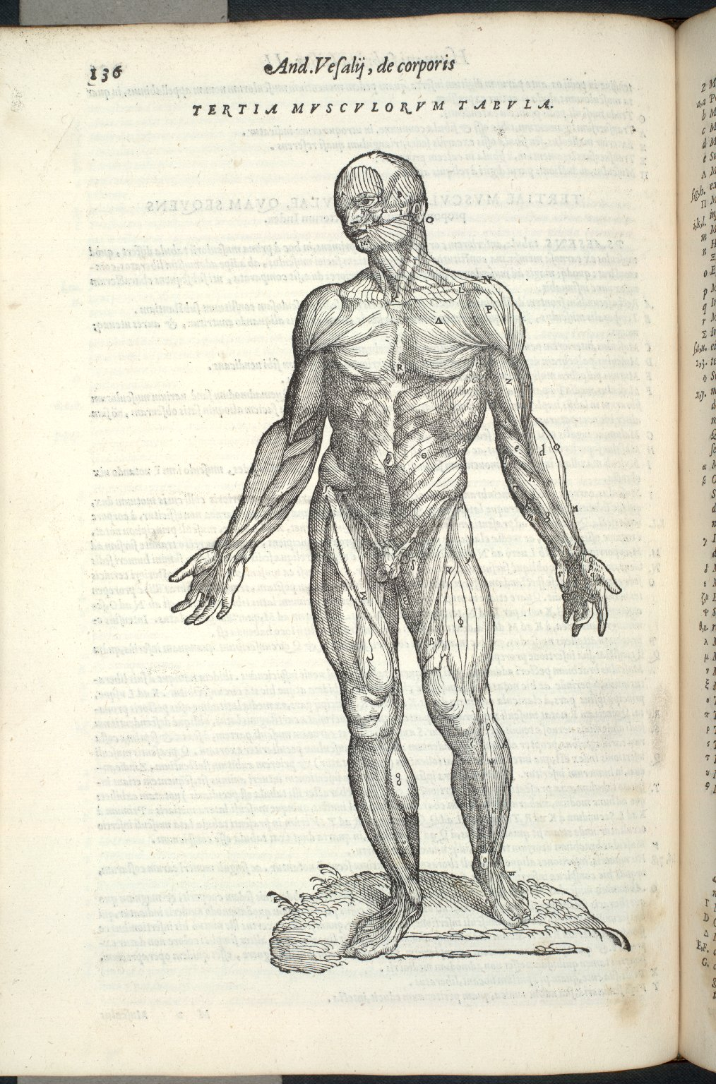 Tertia Musculorum Tabula