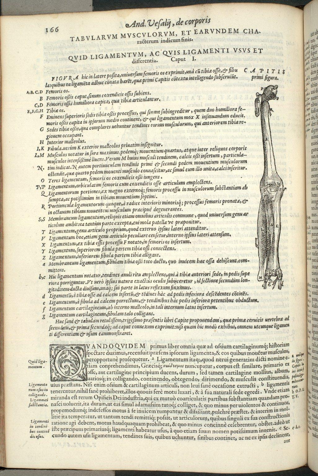 Quid Ligamentum, ac quis Ligamenti Usus et differentia. Caput I. Fig.I