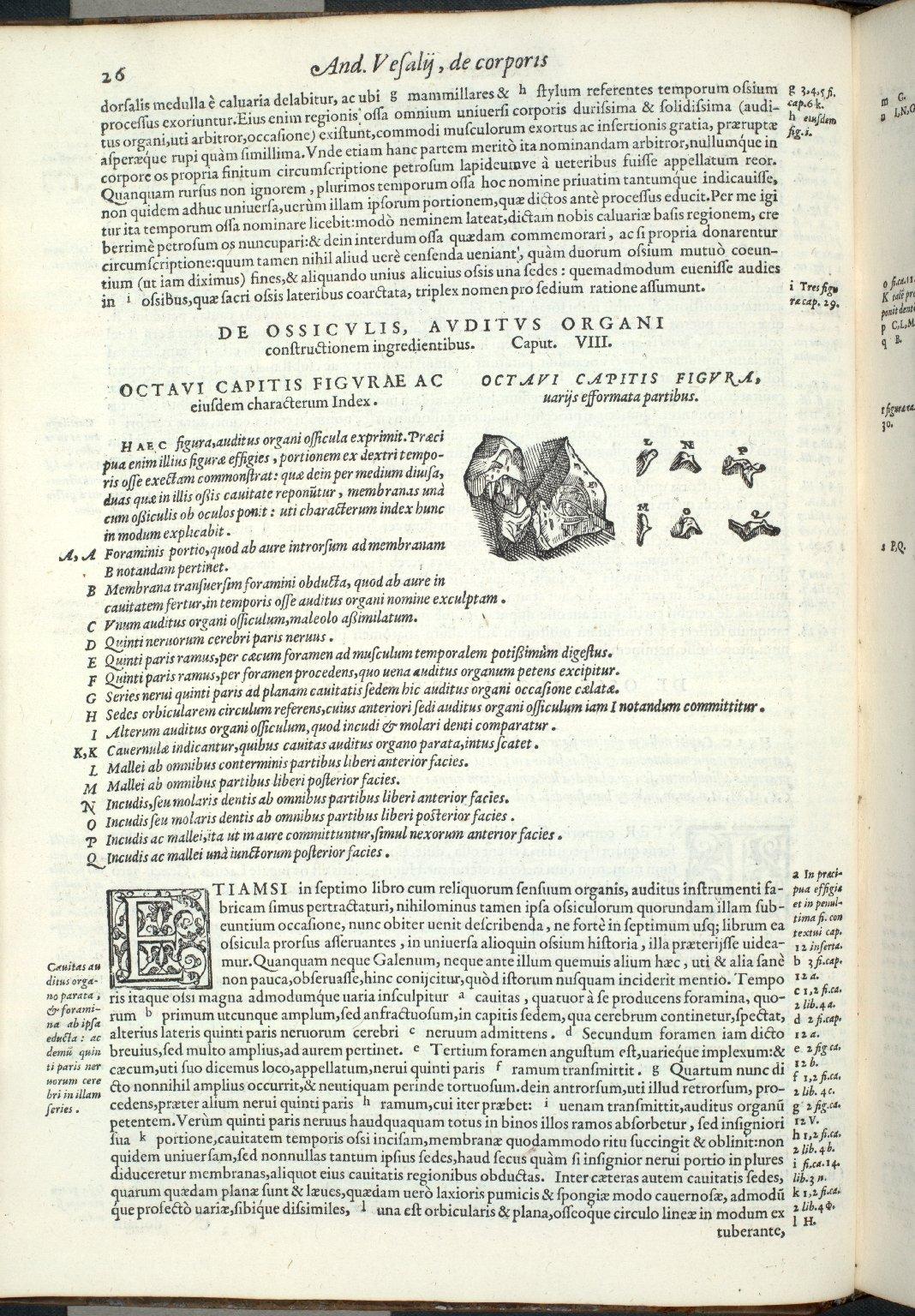 De Ossiculis, Auditus Organi constructionem ingredientibus. Caput VIII.