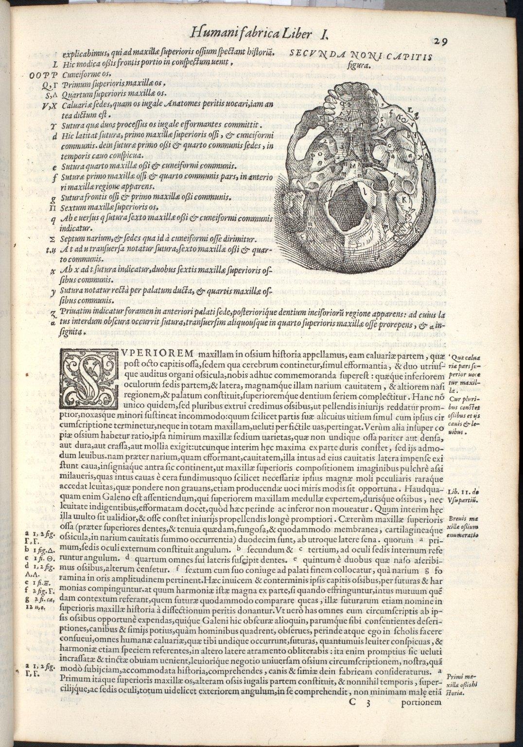 De Duodecim Superioris Maxillae ossibus, in quorum classem nasi ossa etiam referuntur, Caput IX, Fig.II