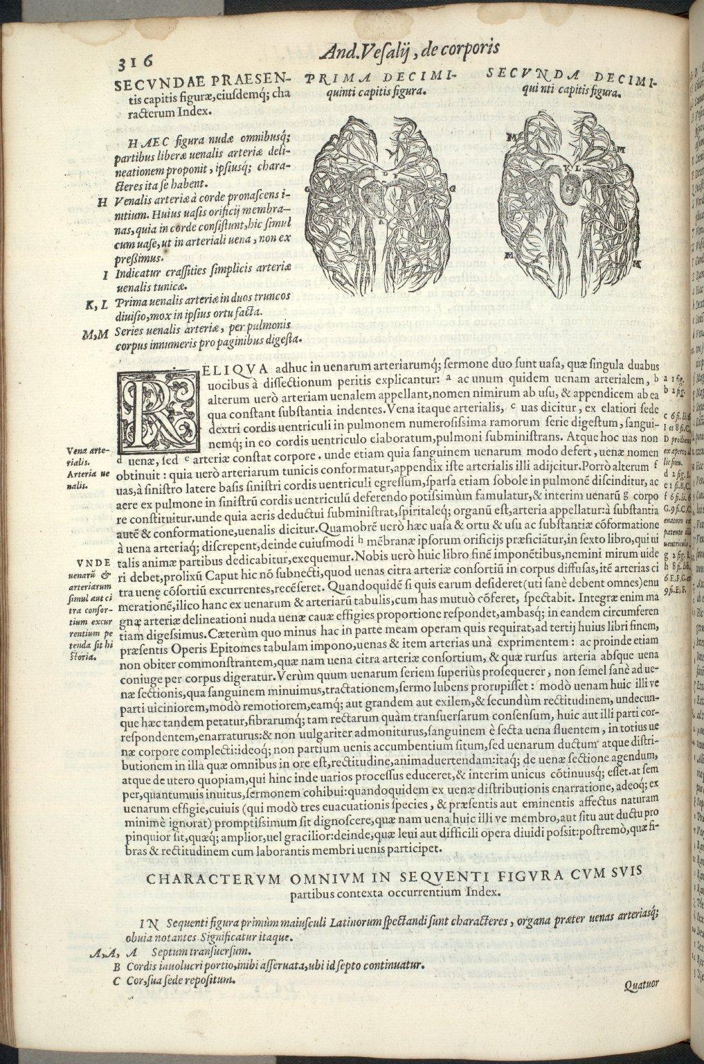 De Vena Arteriali, et arteria venali. Caput XV.