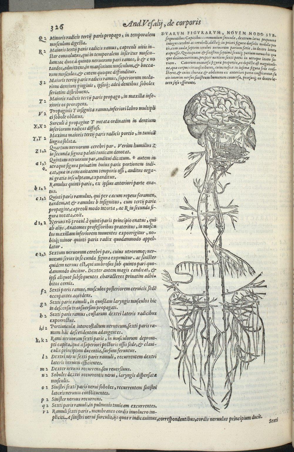 Duarum Figuram, novem modo subsequentibus capitibus communium secunda..