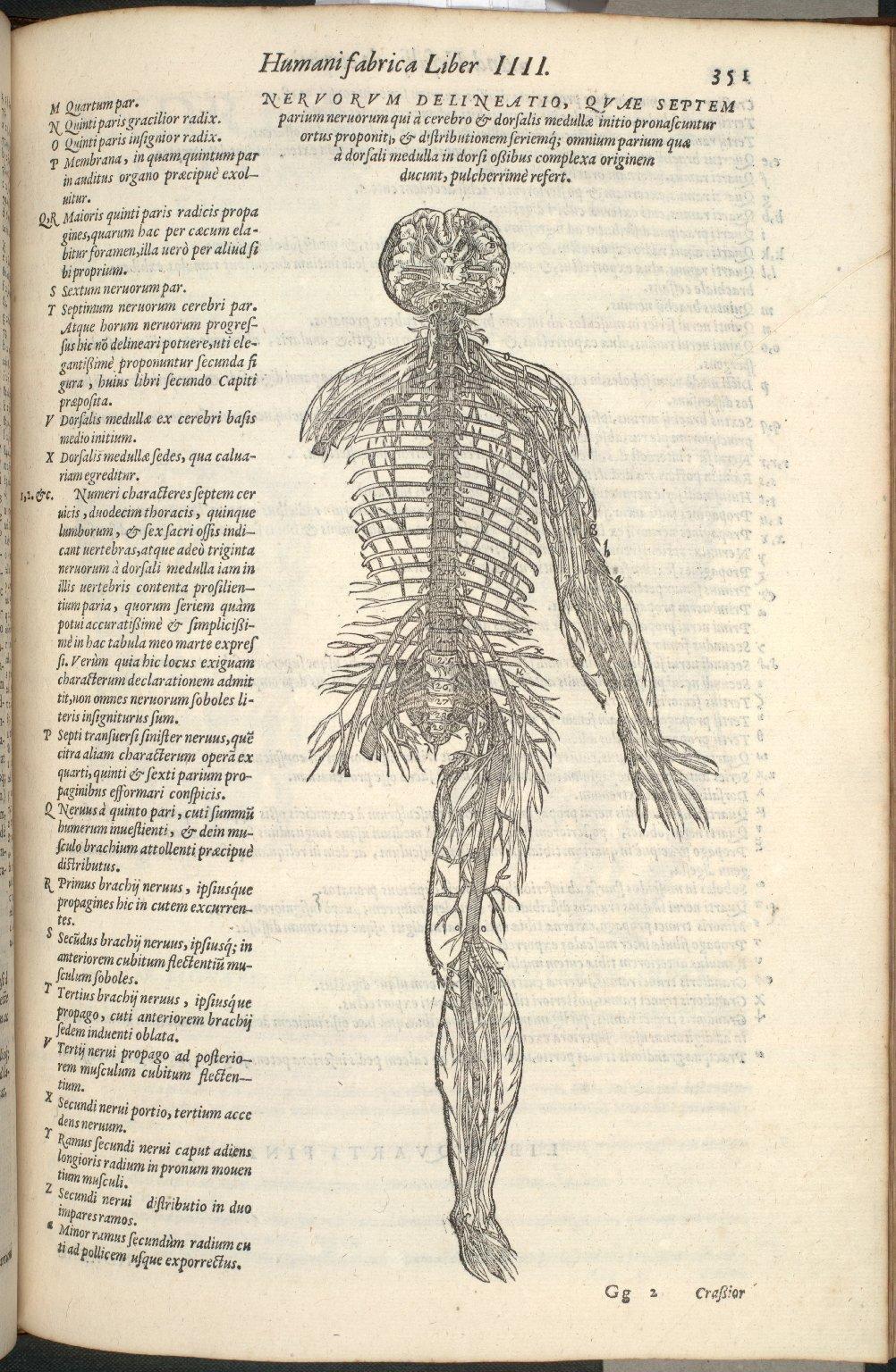 Nervorem delineatio, quae septem parium nervorum qui a cerebro et dorsalis medullae initio pronascuntur ortus proponit