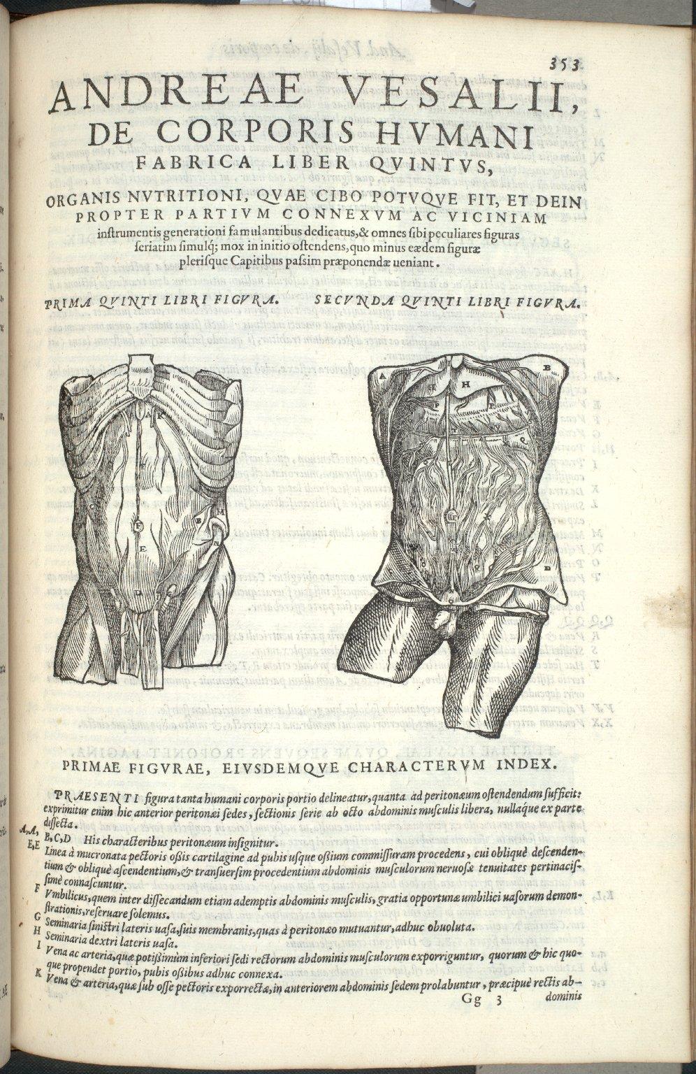 Organis Nutritioni, Prima Quinti Libri Figura, Secunda Quinti Libri Figura