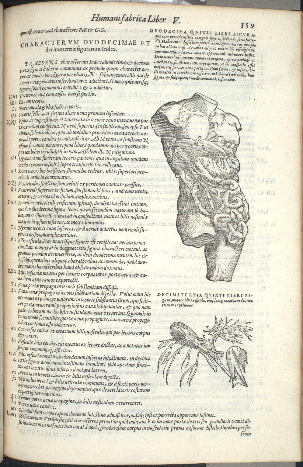 Duodecima Quinti Libri Figura, Decimatertia Quinti Libri Figura