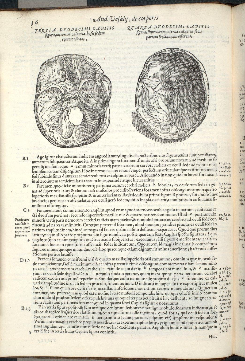 De Ossium Capitis et Maxillae superioris foraminibus. Caput XII. Fig.III-IIII