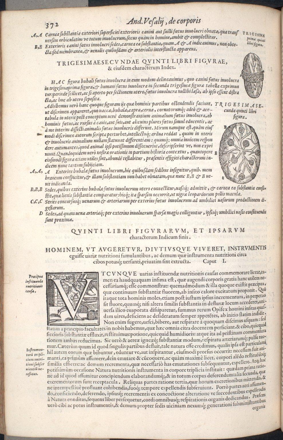 Trigesimaprima Quinti Libri Figura. Trigesimasecunda Quinti Libri Figura