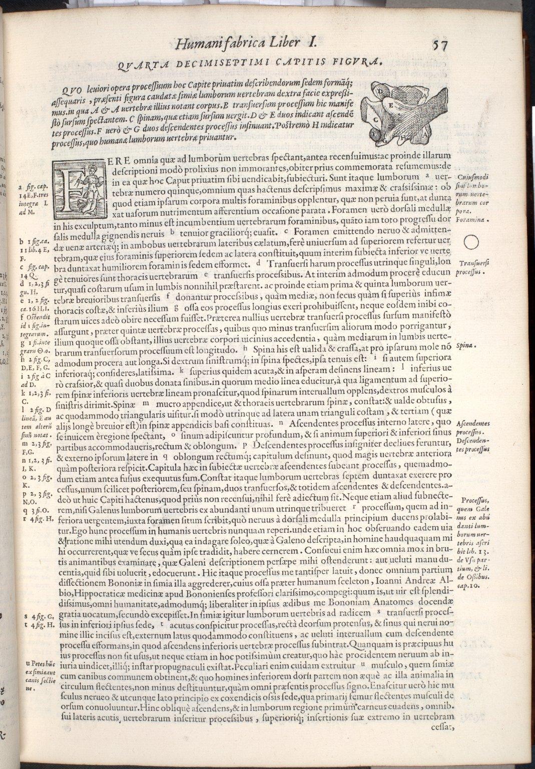 De lumborum vertebris. Caput XVII. Fig.IV