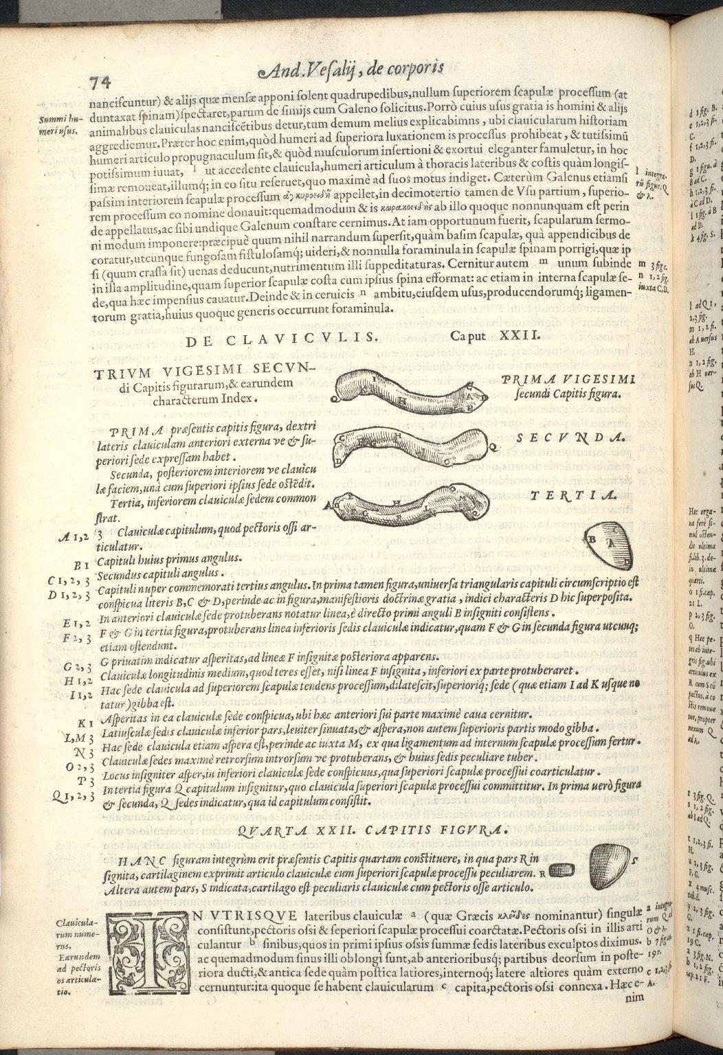 De claviculus. Caput XXII. Fig.I-IIII