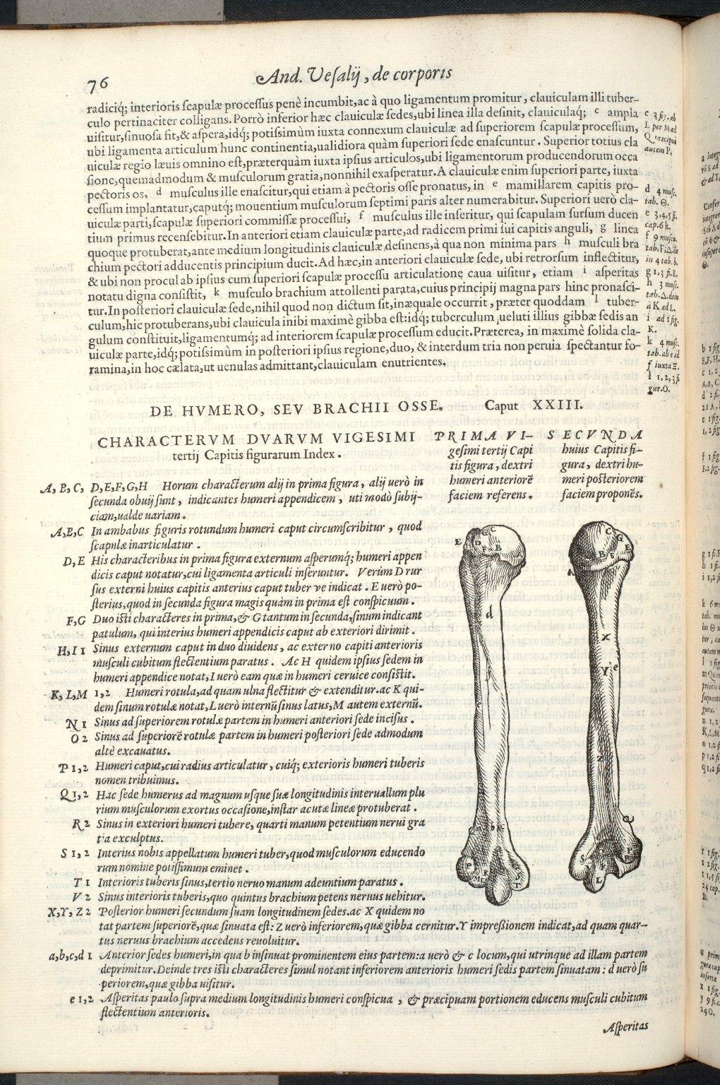 De humero sev brachii osse. Caput XXIII. Fig.I-II