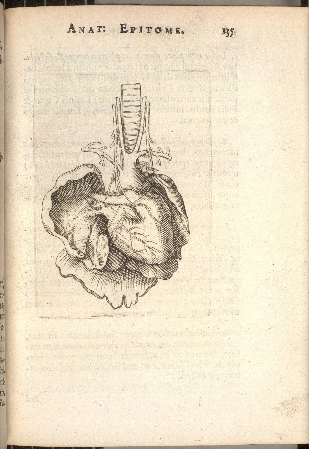 [left side of the heart]