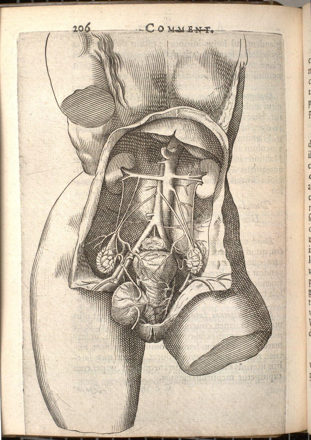 [femal torso]
