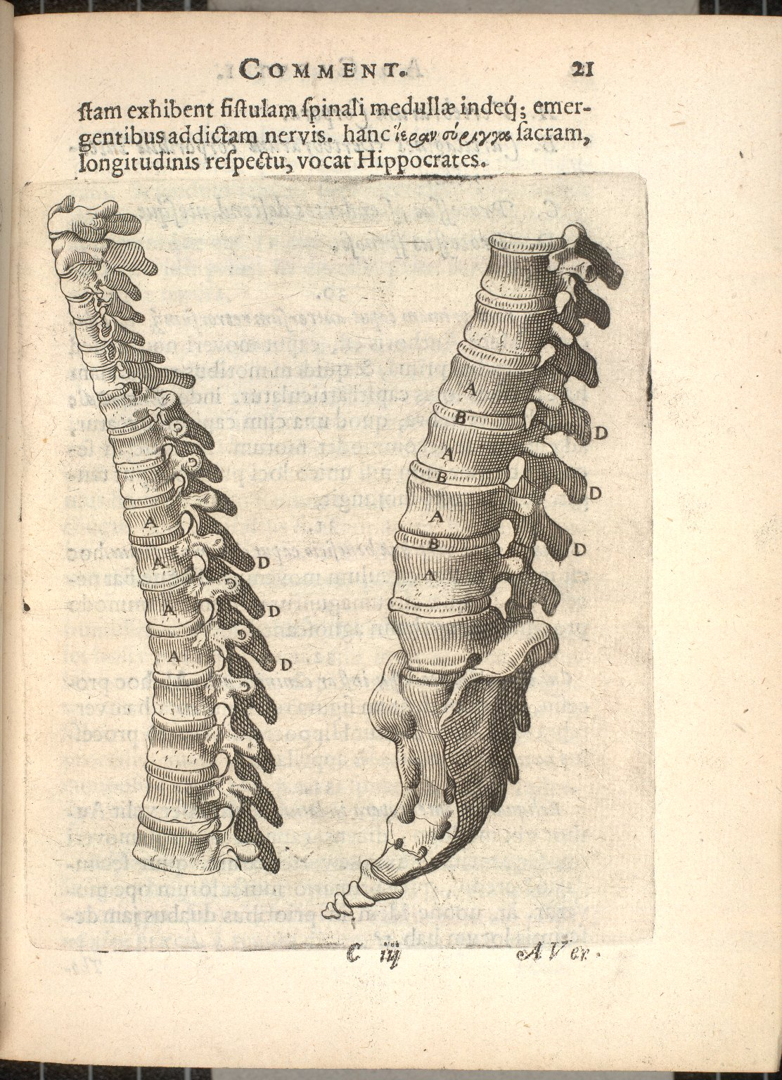 [lateral view of the spinal column]