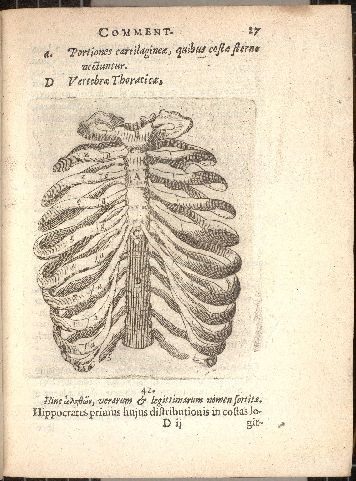 [anterior aspect of the rib cage]