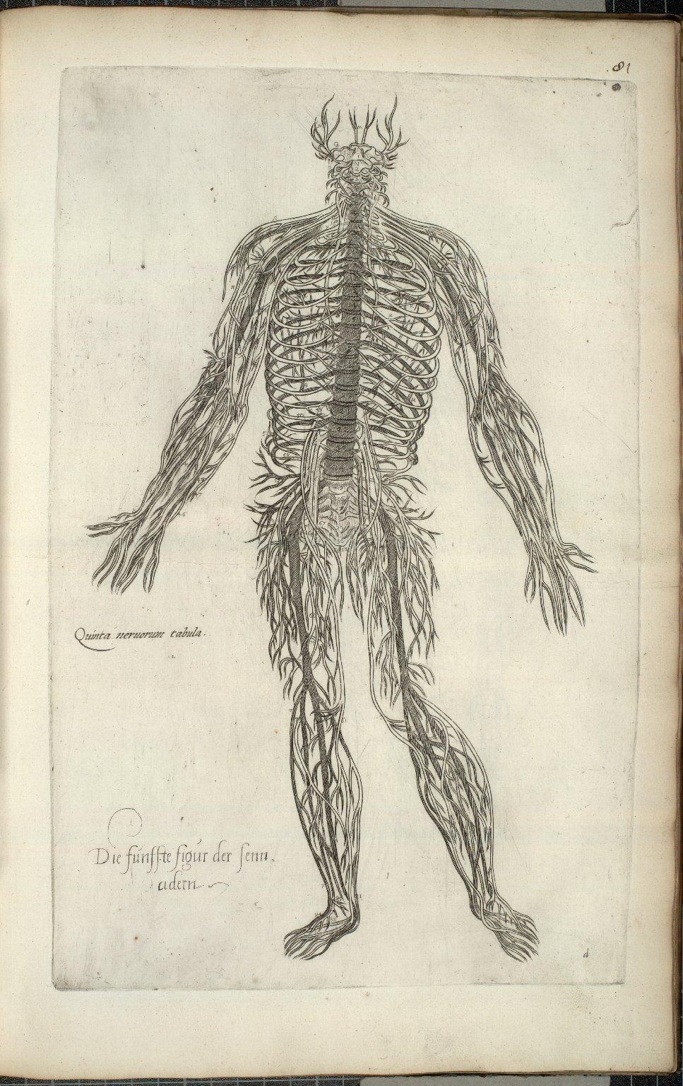 Quinta nervorum tabula