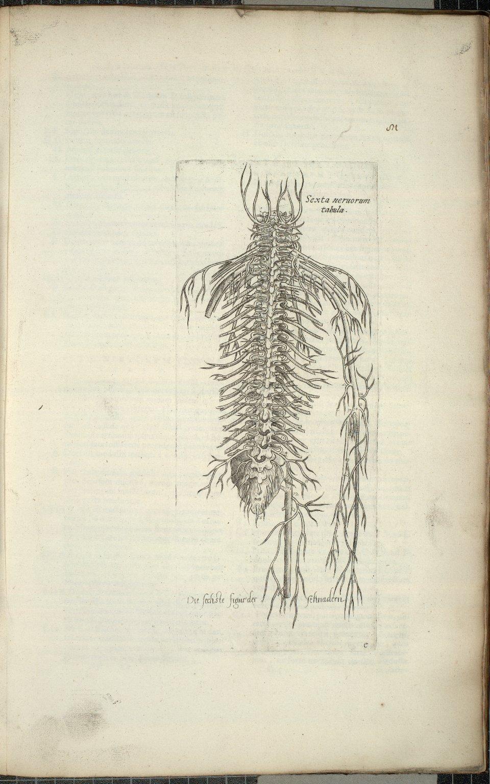 Sexta nervorum tabula