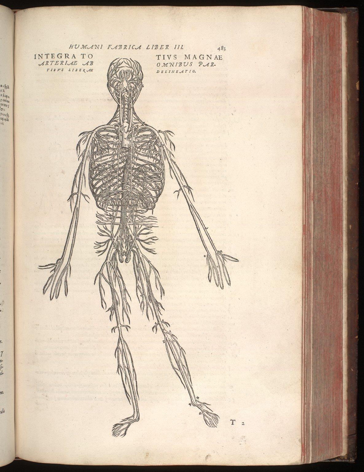 Integra totius magnae arteriae ab omnibus